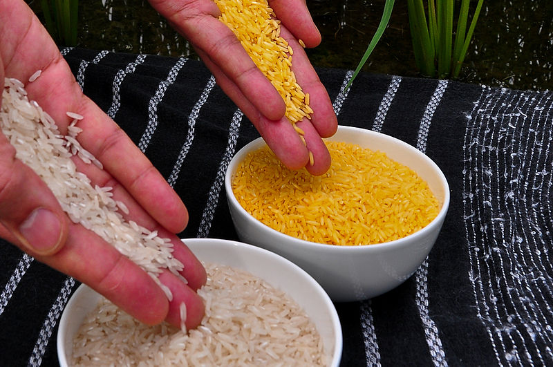 Image of Golden Rice