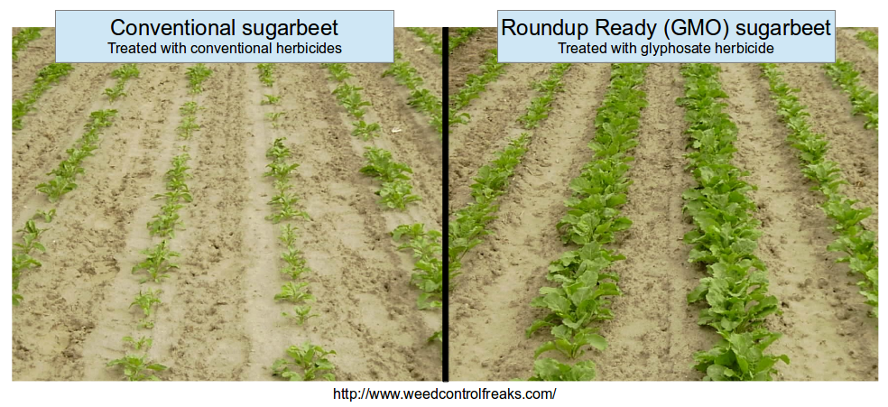 Sugarbeet Injury