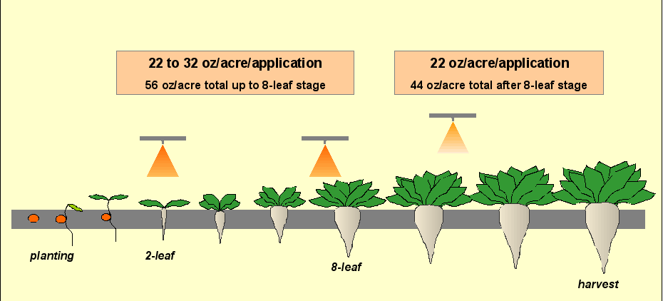 GMO Beet Herbicide Figure