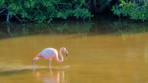 A flamingo in brackish water