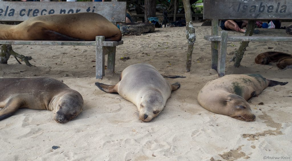 Sea lions taking up all the benches