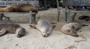 sea lions napping on and around benches at the beach