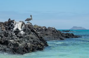 a pelican on a rock perch with another island in the background